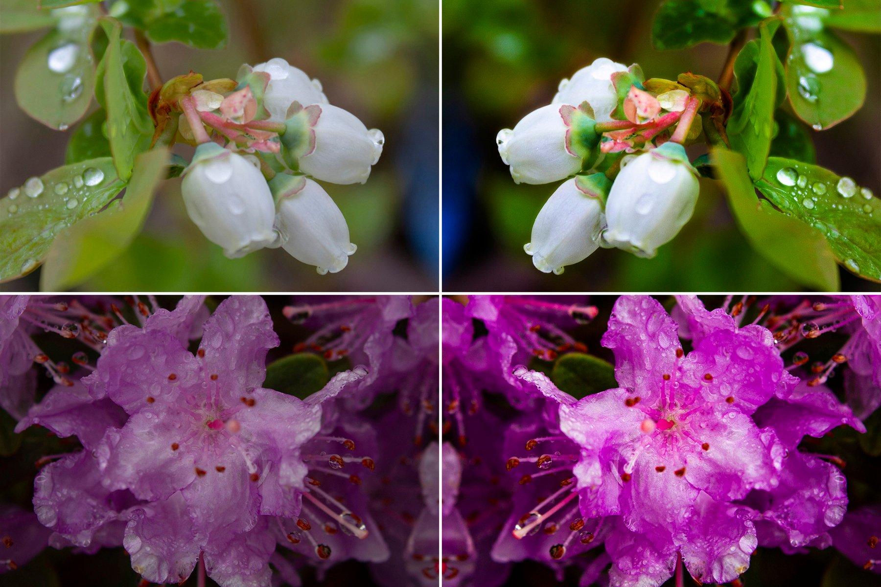 FlowersMontage